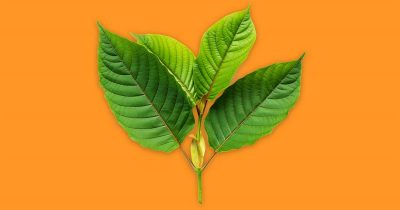Learn important things about Kratom